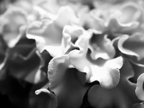 Photos gratuites de abstrait, fleur, gros plan, macro