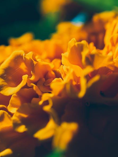 Photos gratuites de abstrait, fleur, gros plan, jaune