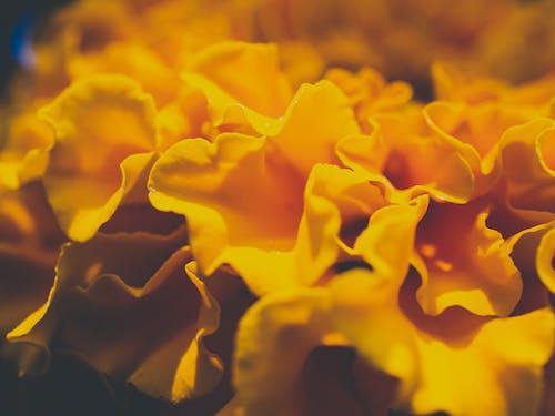 Photos gratuites de abstrait, fleur, floral, gros plan
