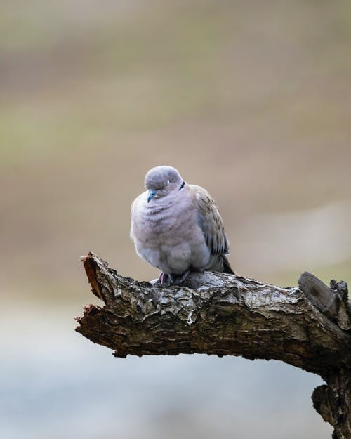Kostnadsfri bild av djur, duva, fågel, färg