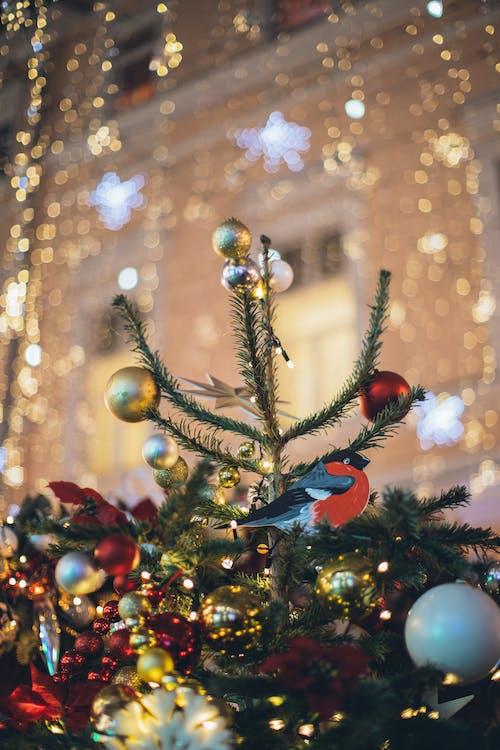 Cây Thông Noel Xanh Với đồ Trang Sức