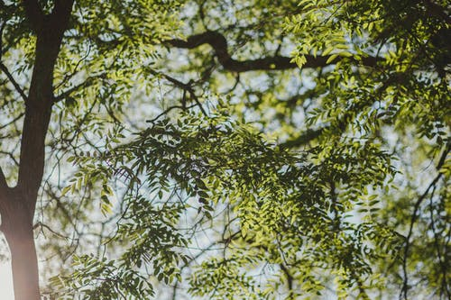 ağaç, arka fon, arka plan, bahar içeren Ücretsiz stok fotoğraf