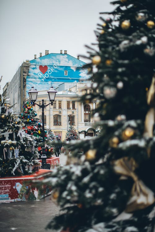 Christmas trees with ornaments in city
