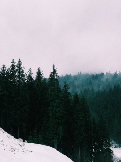 Snowy hilly terrain with coniferous forest