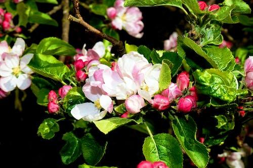 Ảnh lưu trữ miễn phí về bình dị, cận cảnh, cánh hoa, chi nhánh