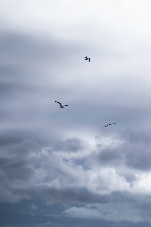 Birds Flying Under White Clouds