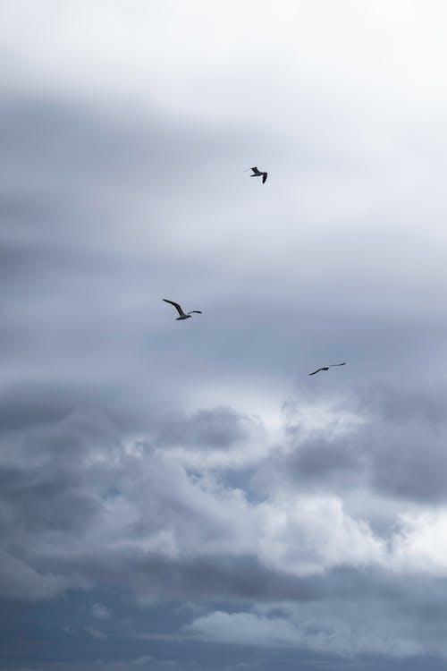 Kostnadsfri bild av atmosfär, djur, fågel, fåglar