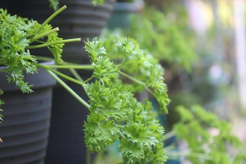 Gratis lagerfoto af baggrund, baghave, grøn, potteplante