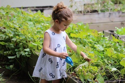 Gratis lagerfoto af grøn, have, hvid, Pige