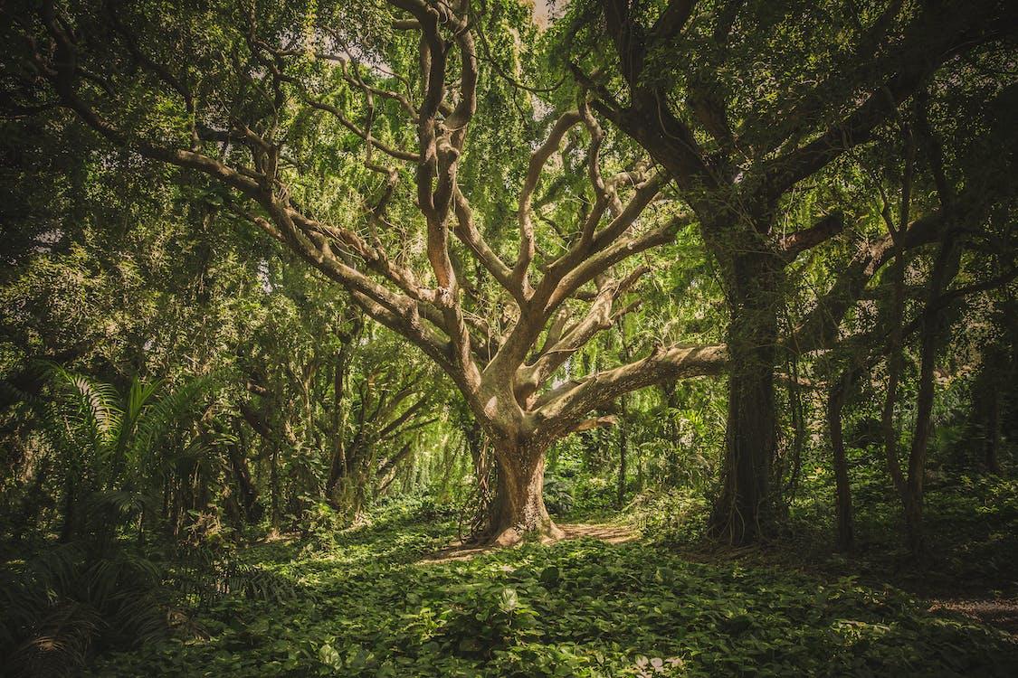 δασικός, δάσος, δέντρα