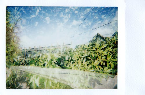 Green Plants Under Blue Sky