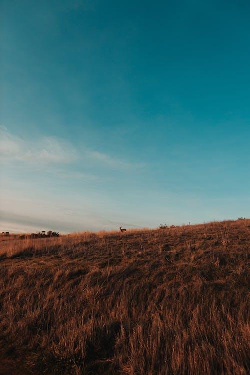 Sunset sky over remote field
