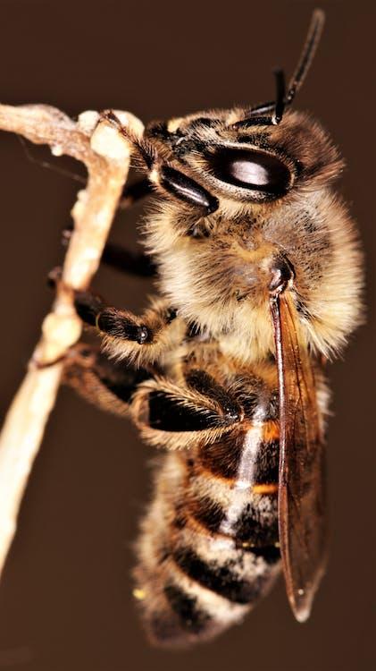 Black and Brown Bee on Brown Stem