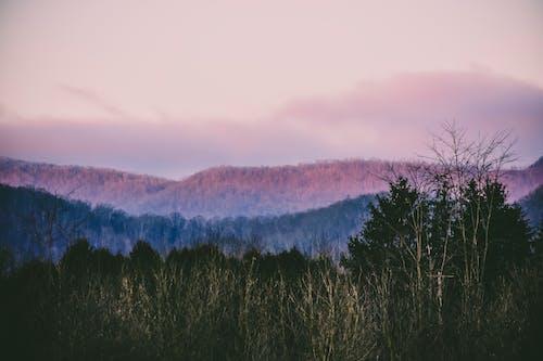 Imagine de stoc gratuită din amurg, apus, arbori, armonie