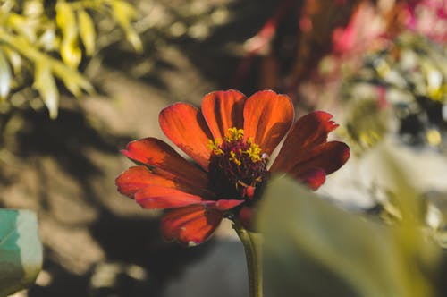 Free stock photo of beautiful flowers, beauty environment, beauty in nature, enjoy