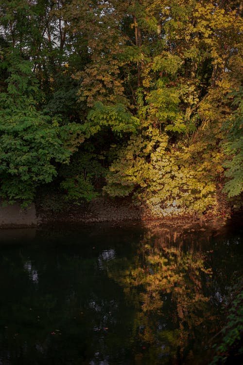 Free stock photo of green, nature, ray of sunshine, river