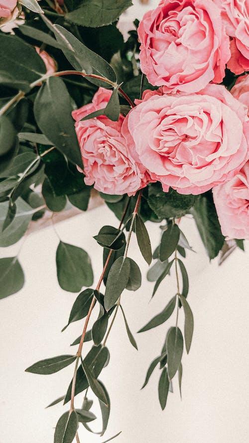 Immagine gratuita di bocciolo, crescita, delicato, fiori