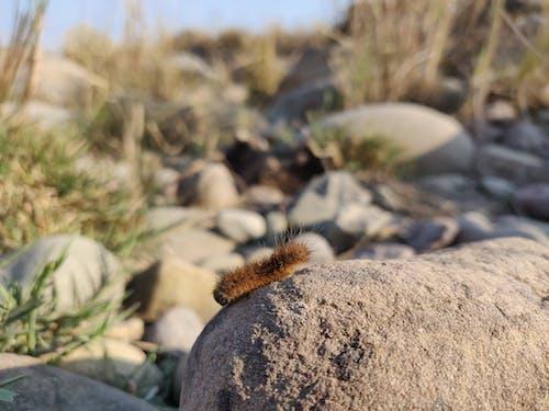 Ilmainen kuvapankkikuva tunnisteilla hyönteinen, järvenranta, kauneus luonnossa