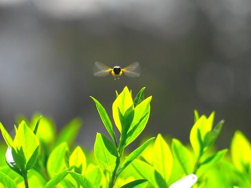 Fotobanka sbezplatnými fotkami na tému detailný záber, divý, farby, hmyz
