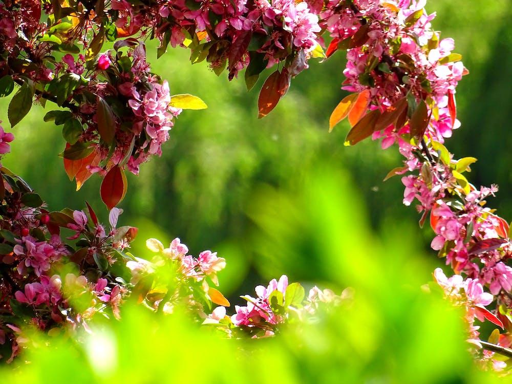 Bahçe, bitki, bitki örtüsü