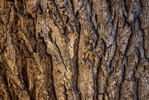 Brown Tree Bark in Close Up Photography