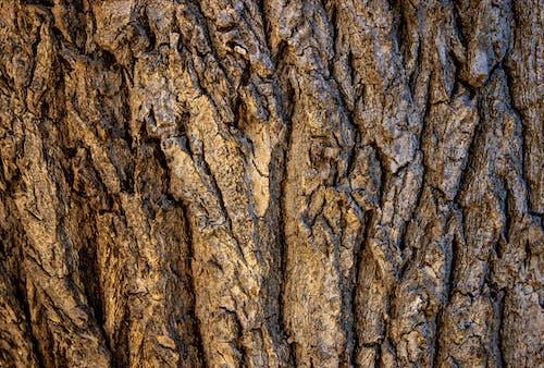 Immagine gratuita di abbaiare, albero, corteccia, fondo in legno