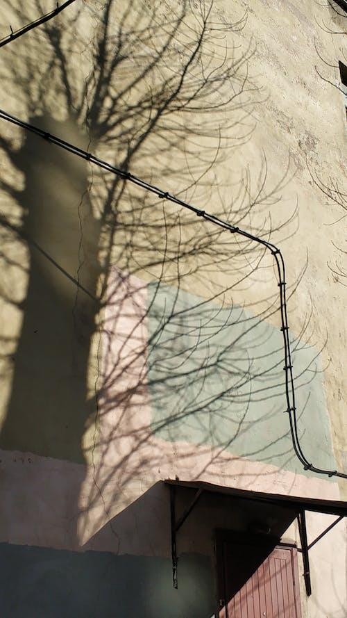 Gratis stockfoto met muur, zonneschijn