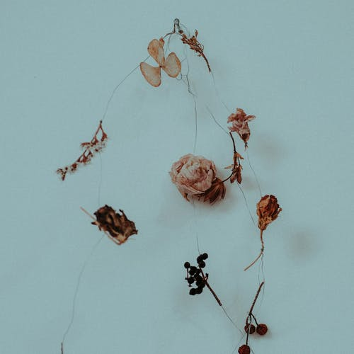 From above of creative composition representing dry fragile flowers and sprigs with leaves and berries on thin thread on blue background