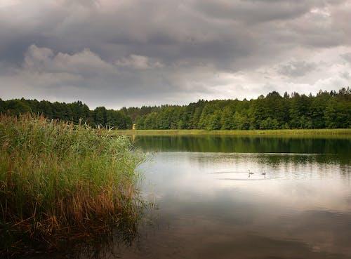 Free stock photo of clouds, lake, wild ducks