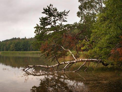 Free stock photo of lake, tree