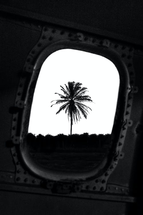 View from inside crushed metal airplane cabin with rounded window of palm with lush branches under cloudless sky