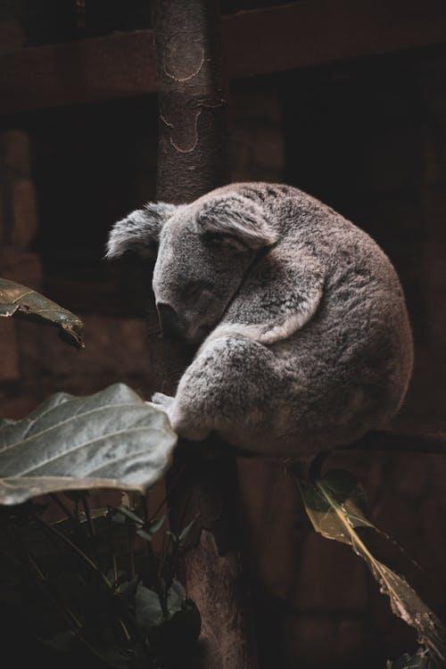 คลังภาพถ่ายฟรี ของ การถ่ายภาพสัตว์, การพักผ่อน, กิ่งไม้