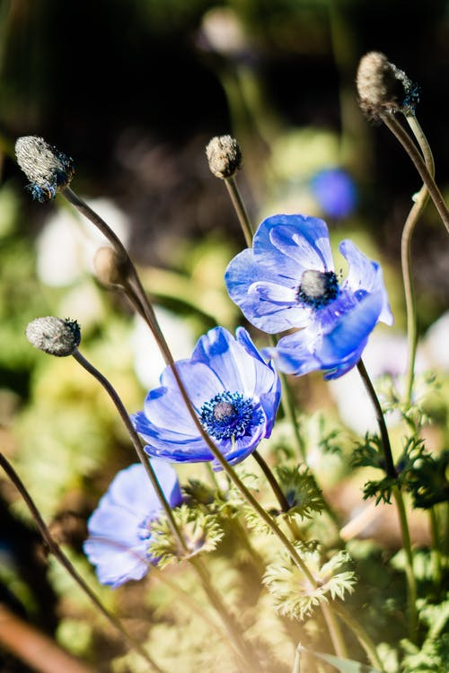 Blue Flowers in Tilt Shift Lens