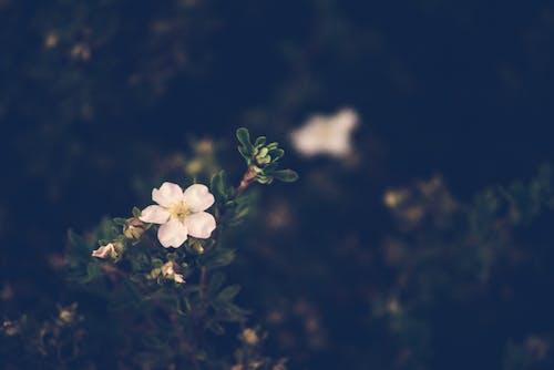 Free stock photo of blume, bunga, fleur, flor