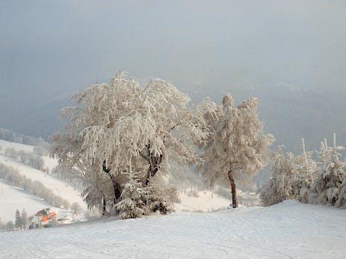 Free stock photo of mountains, trees, winter