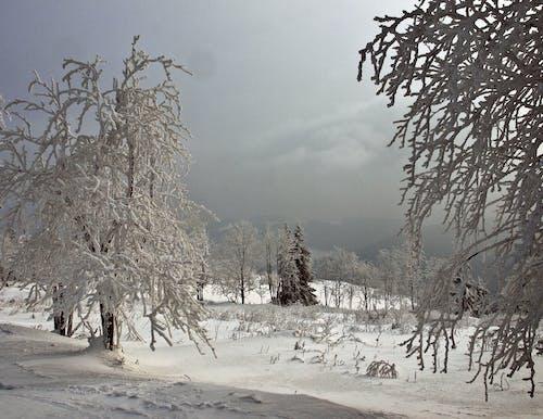 Free stock photo of mountains, winter