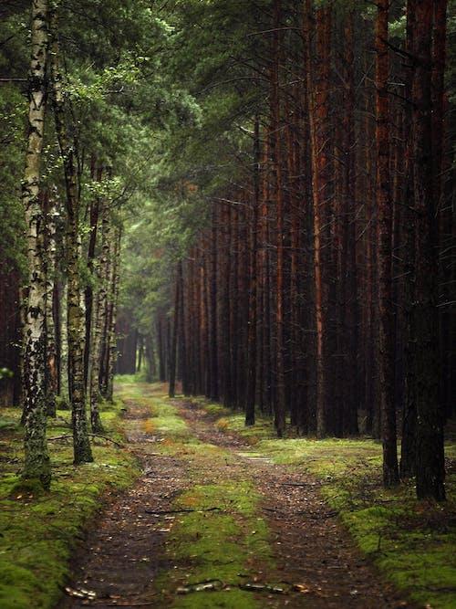 Kostenloses Stock Foto zu außerorts, bäume, beratung, draußen
