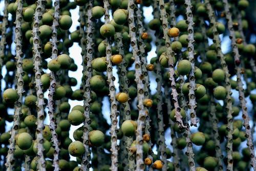 Free stock photo of almond tree, detail, detail shot
