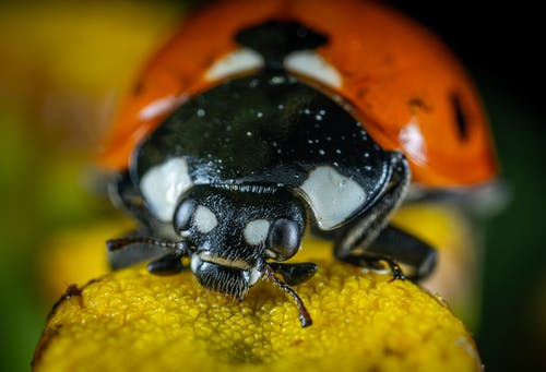 Close-Up Photo of Ladybug