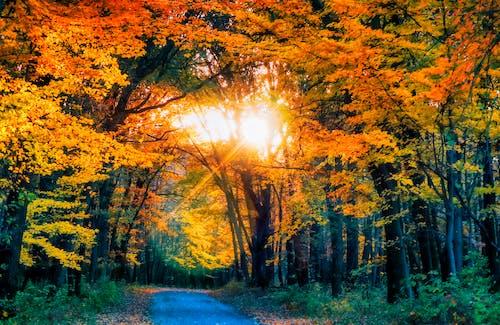 Δωρεάν στοκ φωτογραφιών με ήλιος, κίτρινη, πορτοκάλι, πτώση των χρωμάτων
