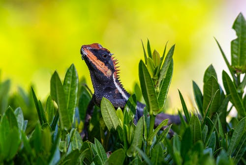 Brown and Black Bearded Dragon on Green Plant