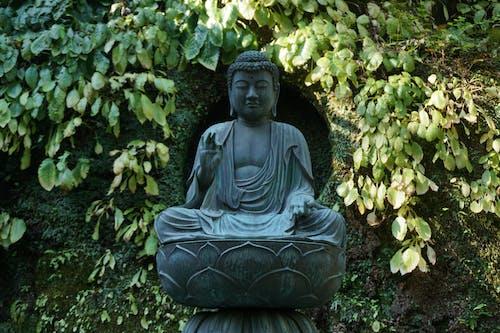Free stock photo of buddhist, buddhist temple, garden