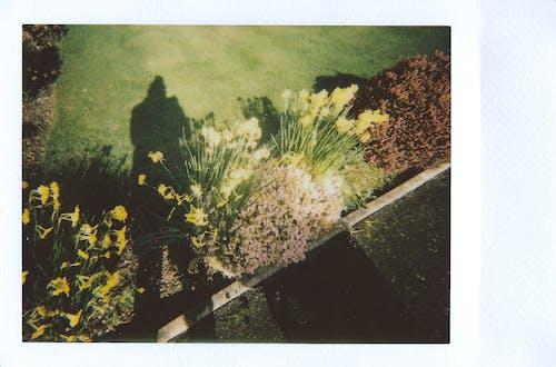 公園, 即時攝影, 即時照片, 即時電影 的 免費圖庫相片