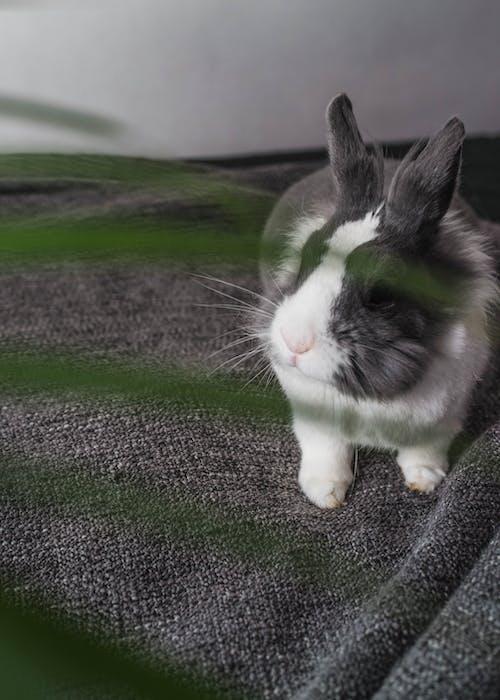 Fotos de stock gratuitas de adorable, animal, animal domestico, aterciopelado