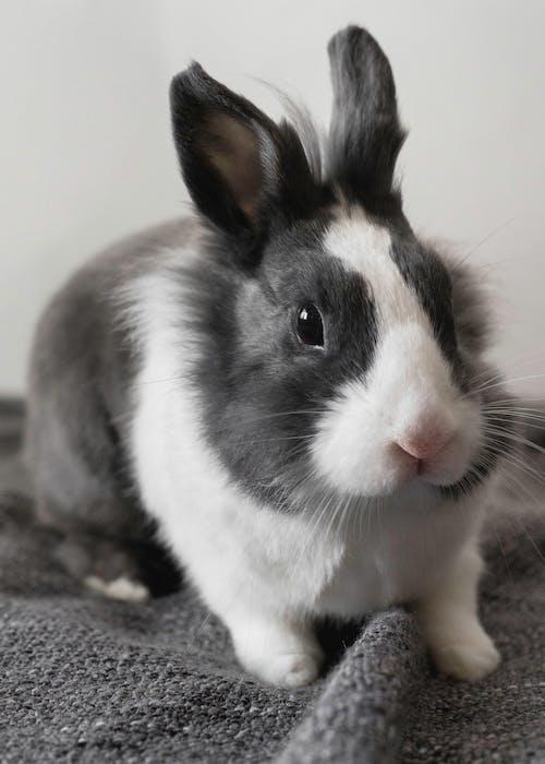 Kostnadsfri bild av däggdjur, djur, djurfotografi, husdjur