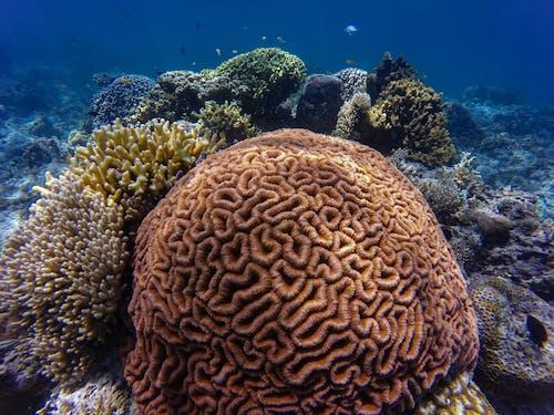 Foto profissional grátis de água, água salgada, animais de recife, animais selvagens