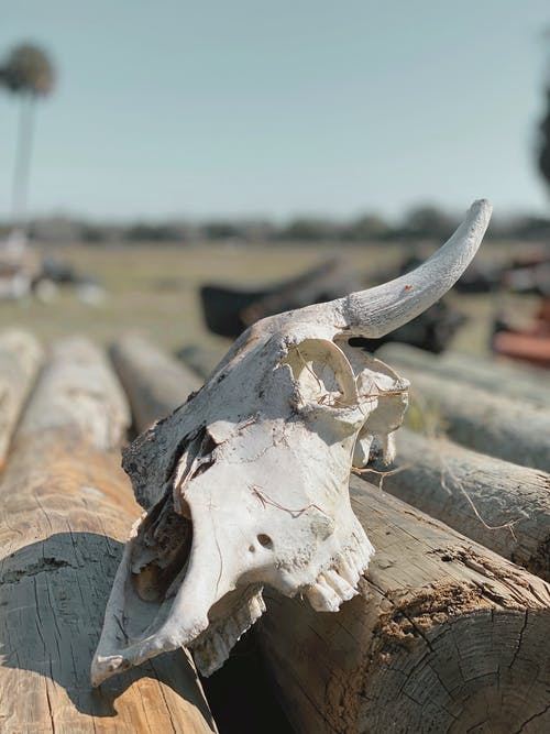 Free stock photo of cow, dead, florida, nature