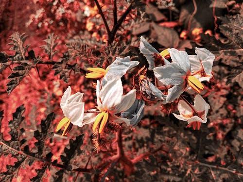 天性, 性質, 樹, 美麗的花 的 免費圖庫相片