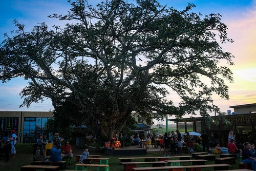 People Sitting on Bench Under Green Tree