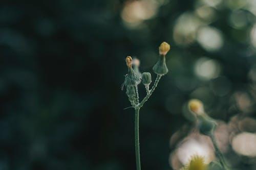 Free stock photo of 4k wallpaper, artistic background, beautiful flower, blur